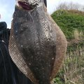 つーりんぐさんの北海道二海郡での釣果写真