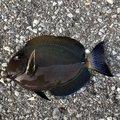 ムッシューむらむらさんの沖縄県での釣果写真
