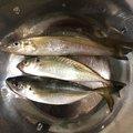 Kpapaさんのシロギスの釣果写真