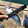カツキさんの福岡県糟屋郡での釣果写真