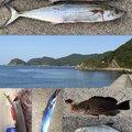 プリーマさんの熊本県でのタチウオの釣果写真