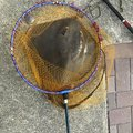 Osamu Nakaharaさんの岡山県での釣果写真