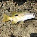 帆乃さんの沖縄県での釣果写真
