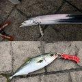 まことさんの神奈川県横須賀市でのタチウオの釣果写真