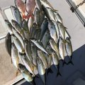 タニヤンさんの和歌山県での釣果写真