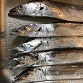 まるわたろうさんの神奈川県横須賀市でのタチウオの釣果写真