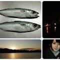 ふのりさんの宮城県気仙沼市での釣果写真