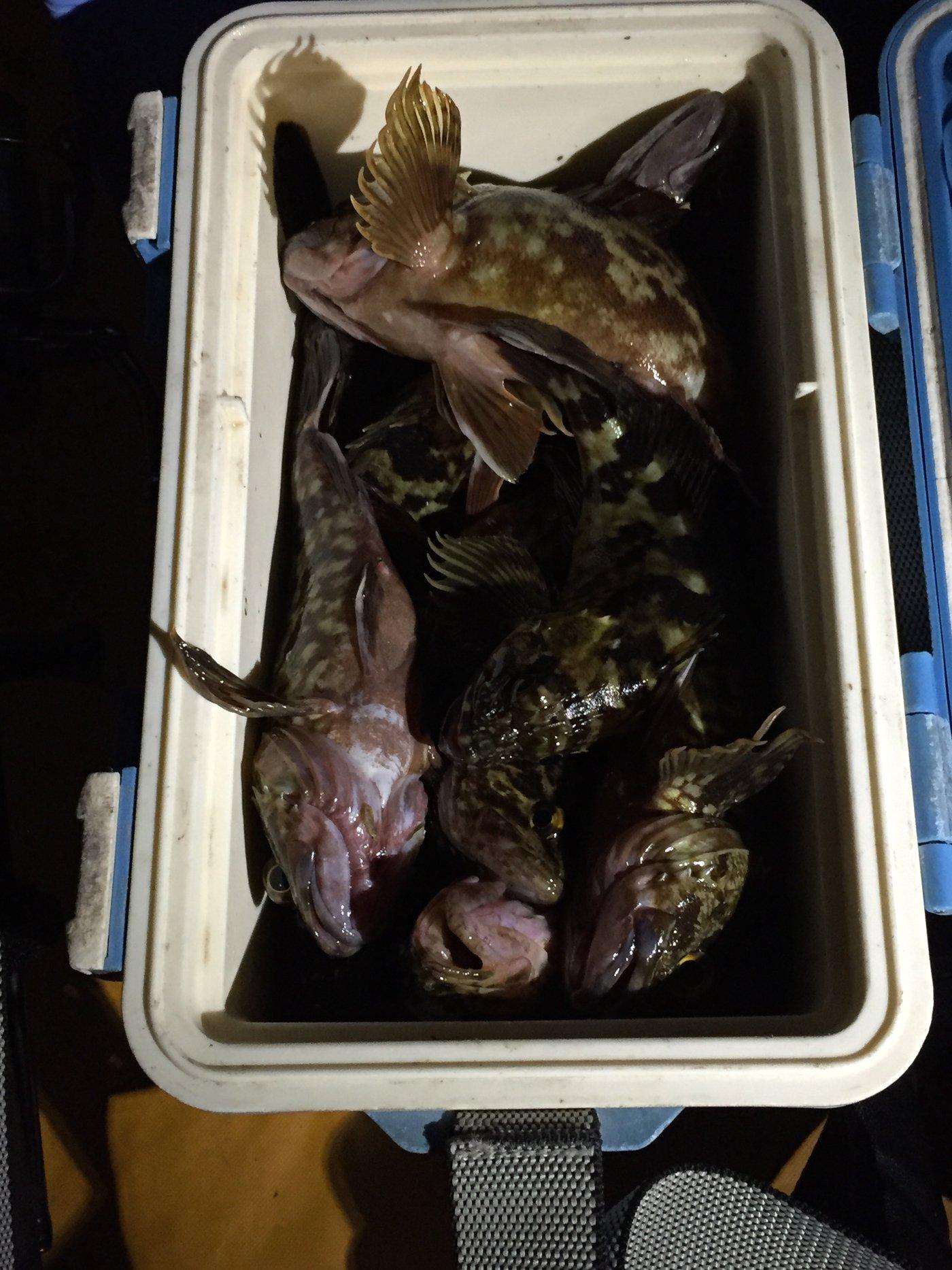 ノリさんさんの投稿画像,写っている魚はカサゴ,クロソイ
