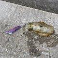 Fatman さんの熊本県での釣果写真