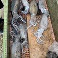 mendaiさんの三重県度会郡での釣果写真
