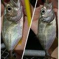 yoshiさんの沖縄県での釣果写真