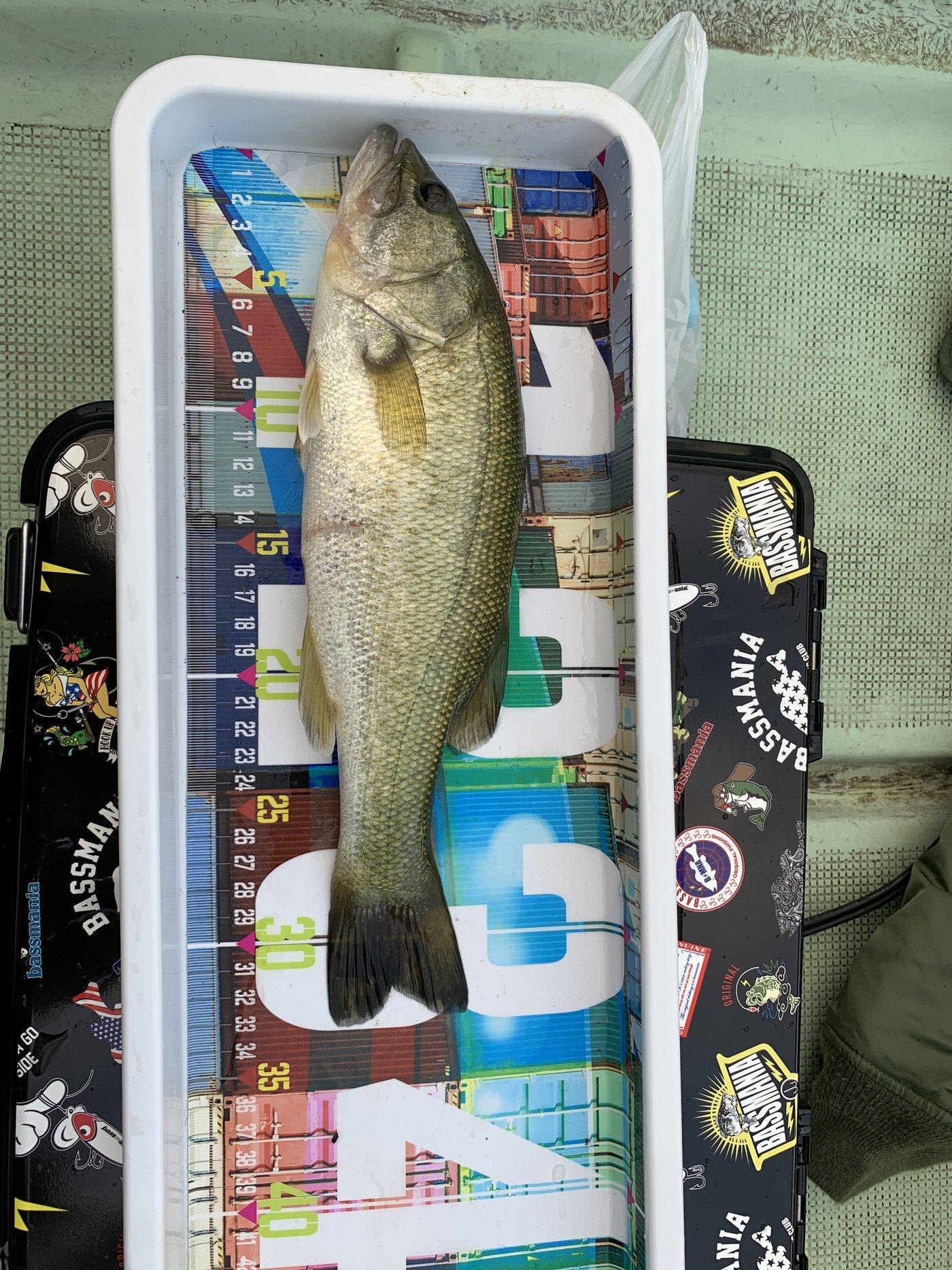 shallowman さんの投稿画像,写っている魚はブラックバス