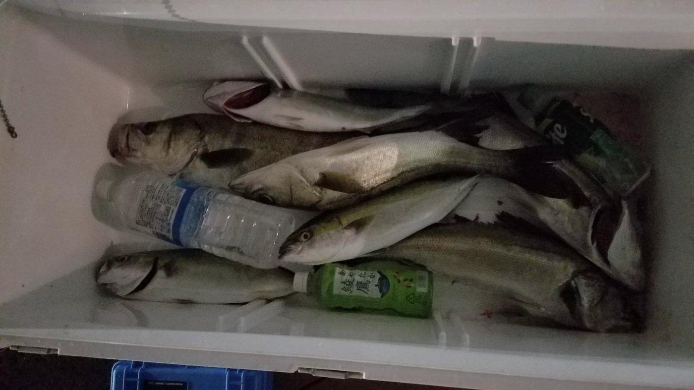 Rzi龍爺さんの投稿画像,写っている魚はスズキ,ブリ