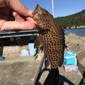 kubotaさんの三重県度会郡での釣果写真