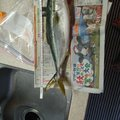 Ryosuke.Mさんの大阪府での釣果写真