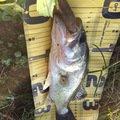 isao-fishingさんの岐阜県養老郡でのブラックバスの釣果写真