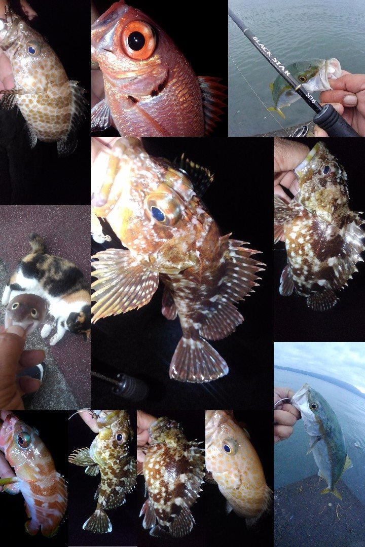 KRO さんの投稿画像,写っている魚はオオモンハタ,カサゴ,アカハタ,ブリ,アナゴ