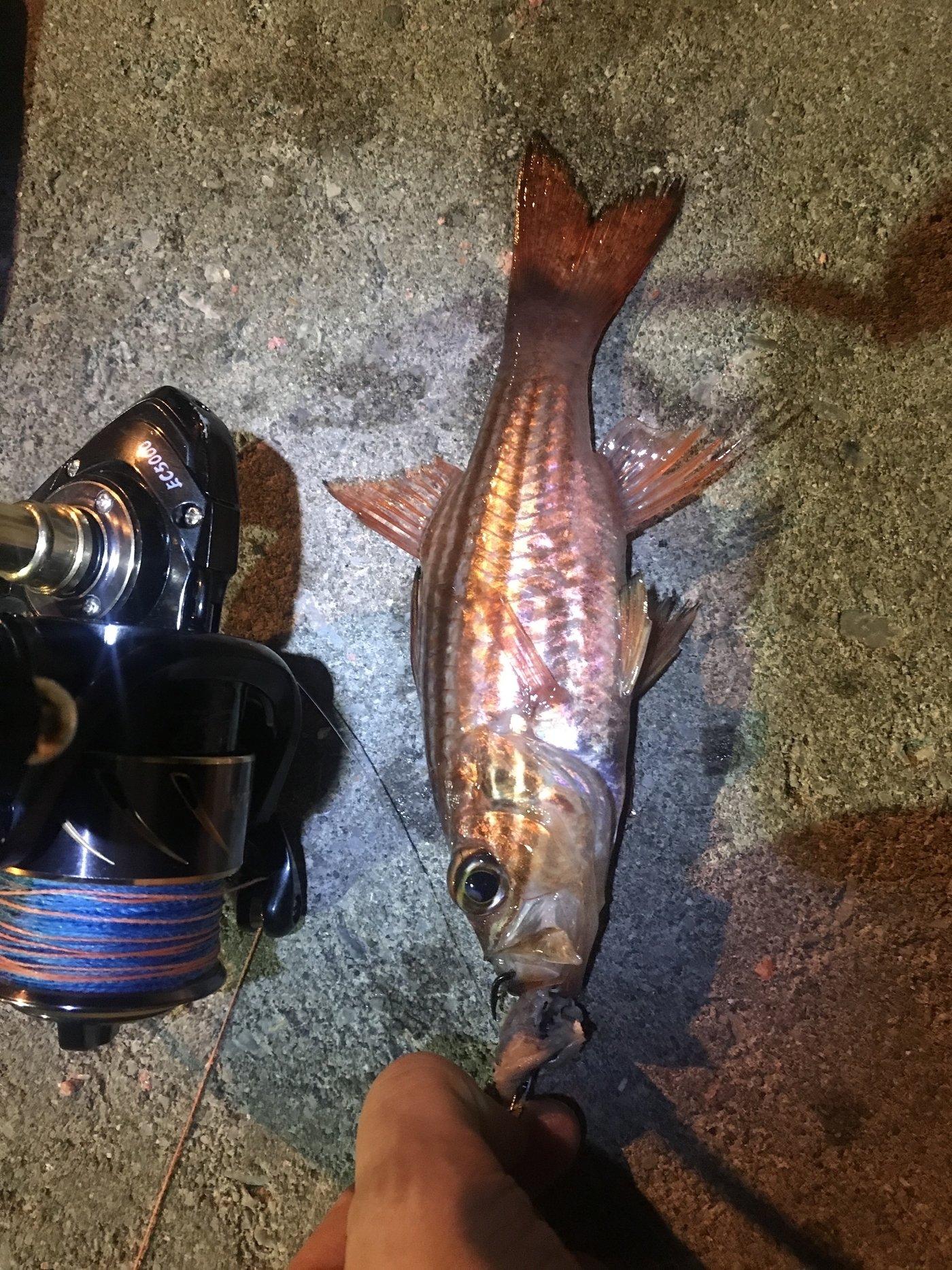 BBAさんの投稿画像,写っている魚はイシモチ