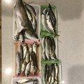 Yoshitaka Itohさんの大阪府での釣果写真
