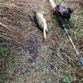 コバヨコ@バス専さんの長野県での釣果写真