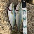入れ喰いトマホーク.kenさんの兵庫県高砂市での釣果写真