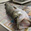singoさんの新潟県での釣果写真