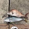 青汁ハイボールさんの岡山県での釣果写真