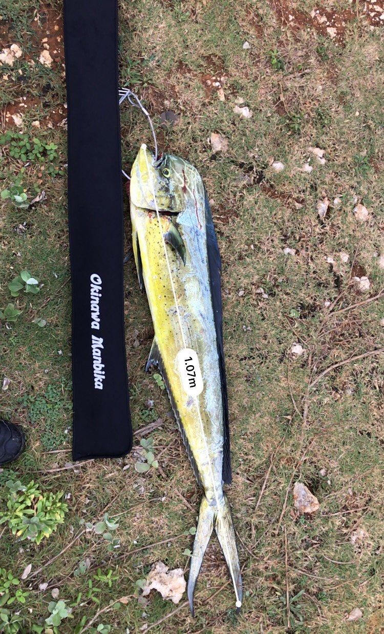 skaさんの投稿画像,写っている魚はシイラ