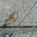 ナンチャンさんの鹿児島県志布志市での釣果写真