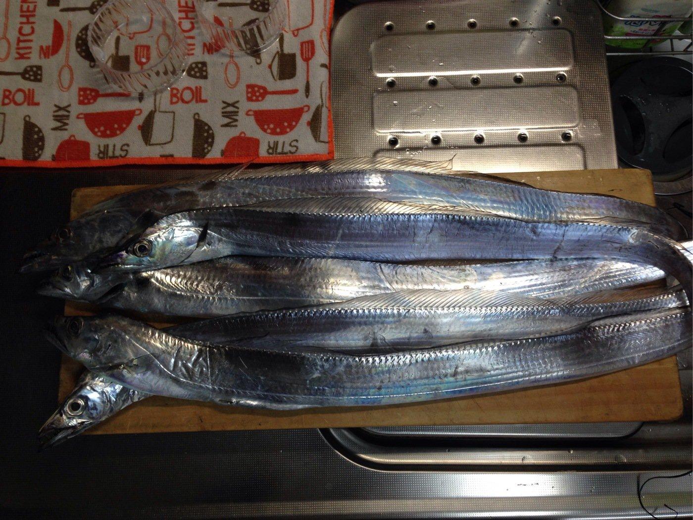 ナベさんの投稿画像,写っている魚はタチウオ
