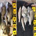 ゲストさんの石川県白山市での釣果写真