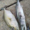 ななみんのぱぱさんの富山県での釣果写真