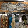 キチさんの山形県での釣果写真