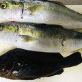 Takuさんの神奈川県足柄下郡での釣果写真