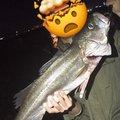 大和さんの和歌山県での釣果写真