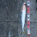 トラさんの鹿児島県出水郡での釣果写真