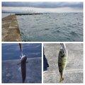 とろさもんさんの大分県大分市での釣果写真