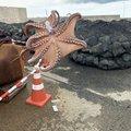 gameon97さんの新潟県でのマダコの釣果写真