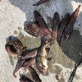 ひのじいさんの岩手県上閉伊郡での釣果写真