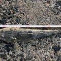 釣り初心者さんの兵庫県明石市でのマツバゴチの釣果写真