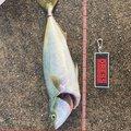 いぶさんの兵庫県芦屋市での釣果写真