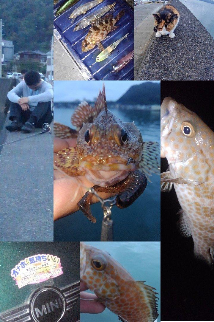 KRO さんの投稿画像,写っている魚はオオモンハタ,カサゴ