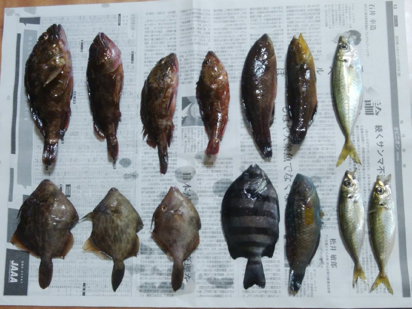 はとぽっぽさんの投稿画像,写っている魚はカサゴ