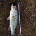 風雅さんの福島県東白川郡での釣果写真