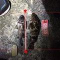 ノリさんさんの三重県四日市市でのタケノコメバルの釣果写真