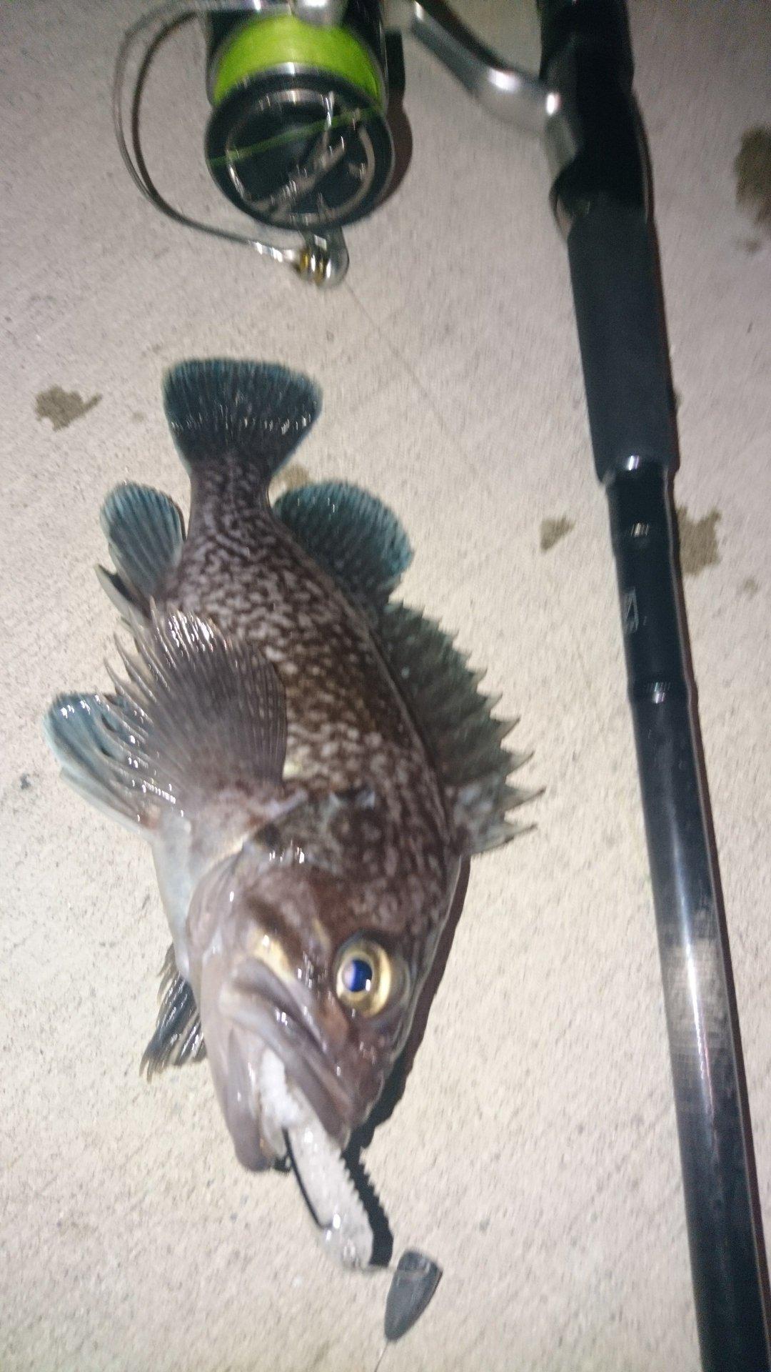 カチュアさんの投稿画像,写っている魚はキツネメバル