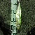 しゅんぴーさんの山口県長門市での釣果写真