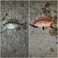 ミズノ・アワさんの沖縄県石垣市での釣果写真
