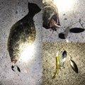 ガンマ似。さんの北海道函館市での釣果写真