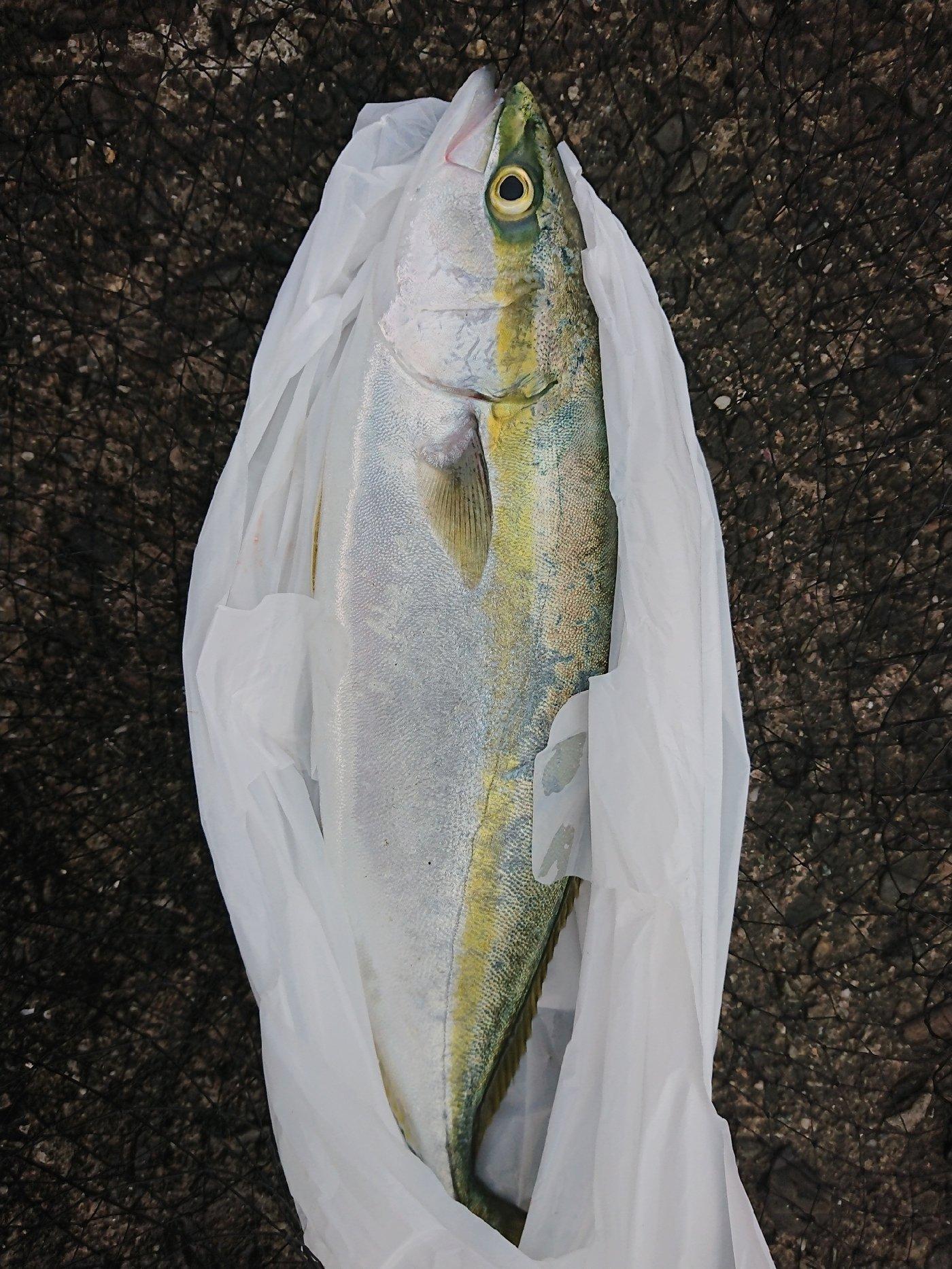 はやとさんの投稿画像,写っている魚は